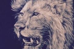 """""""The Lion of Judah"""" Revelation 5:5"""