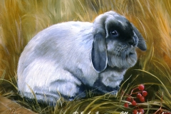 A Hare out of Place