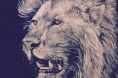 """The Lion of Judah"" Revelation 5:5"