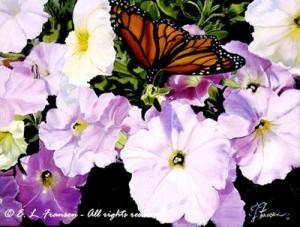 petuniasbutterfly